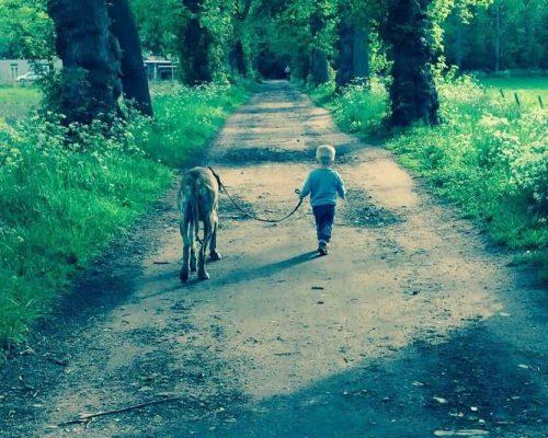 Honden Gedragstraining Hoogstraten