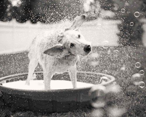 Hondenkapsalons Hoogstraten